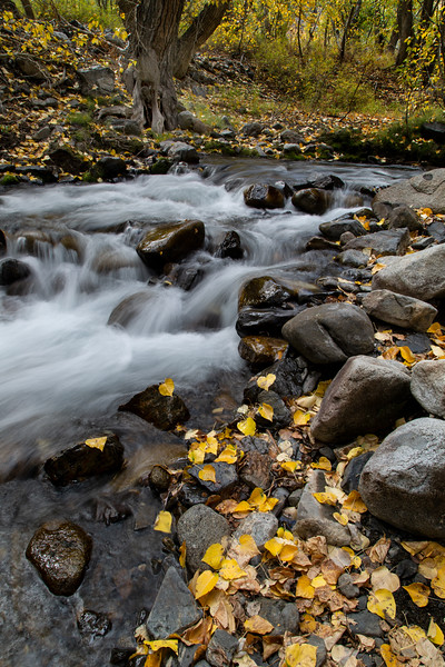McGee Creek, Eastern Sierras, California