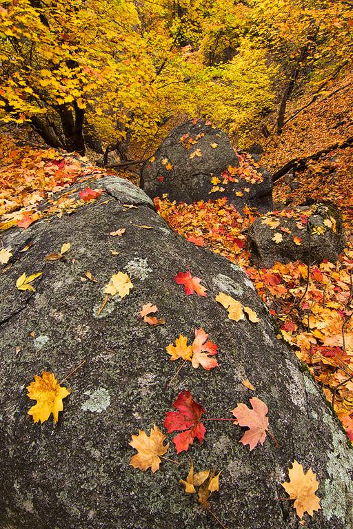 Six Shooter Trail Autumn 2
