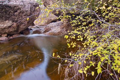 Autumn Colors, First Water Creek
