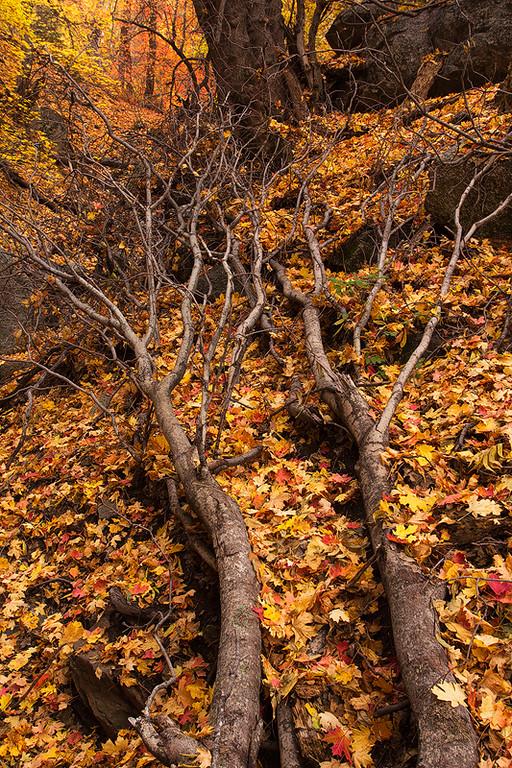 Six Shooter Trail Autumn 6