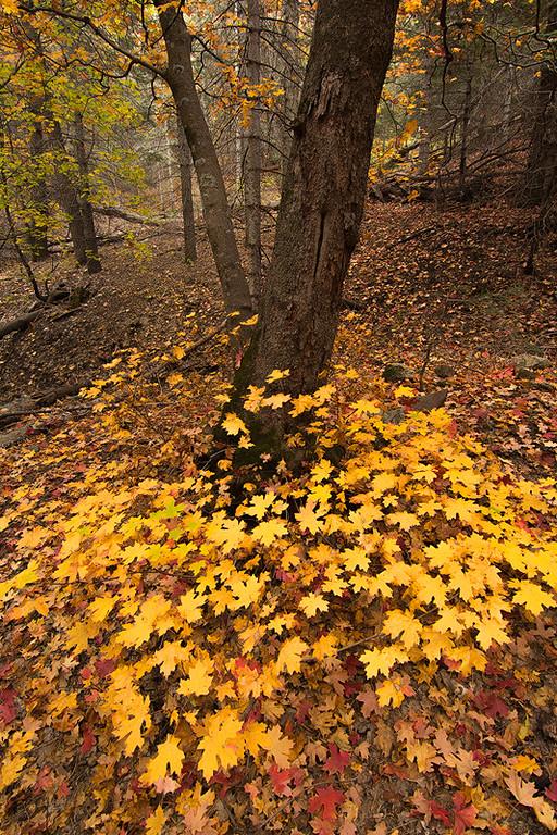 Six Shooter Trail Autumn 1