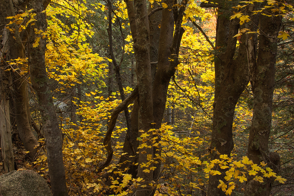 Six Shooter Trail Autumn 5