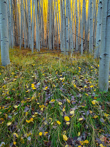 Weatherford Canyon Leaf Litter - vertical