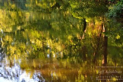 Canopy Reflection