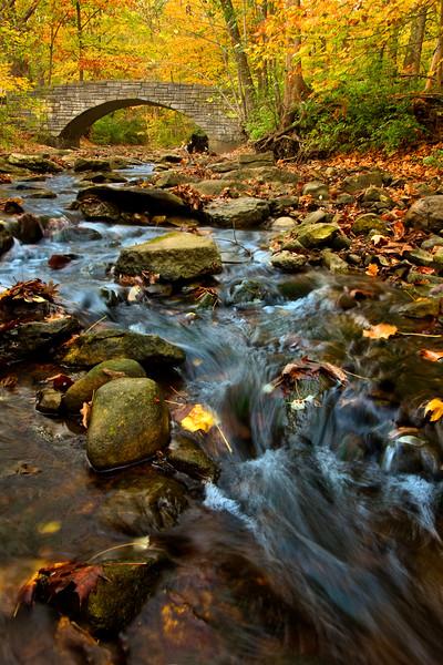 Black Partridge Forest Preserve, Cook County, Illinois