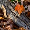 Autumn Sunrise/ Morton Arboretum, Lisle, Illinois
