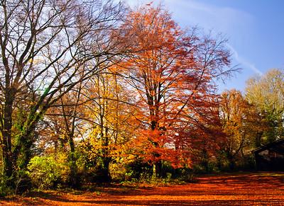 Autumn Woodland on a sunny day
