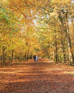 UK - Buckinghamshire - Burnham Beeches