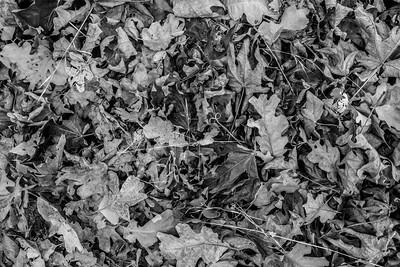 Autumn Foliage. Pleasanton Ridge Regional Park - Sunol, CA, USA