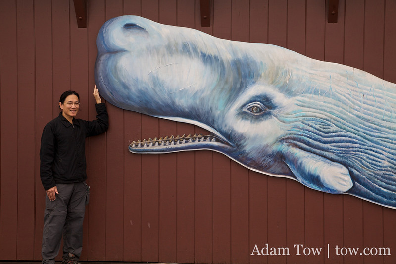 Touching Moby Dick's nose.
