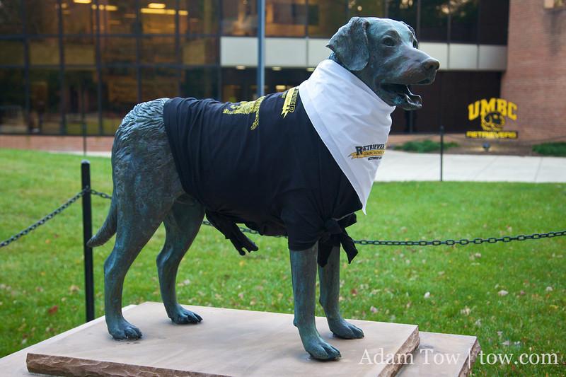 The UMBC mascot is a golden retriever dog.