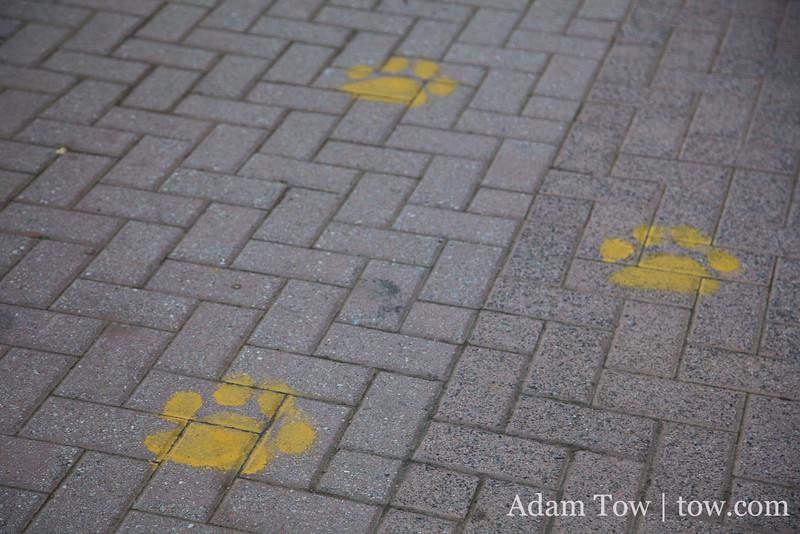 Retriever paw prints mark the campus walkways.