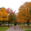 Autumn leaves in Boston Common.