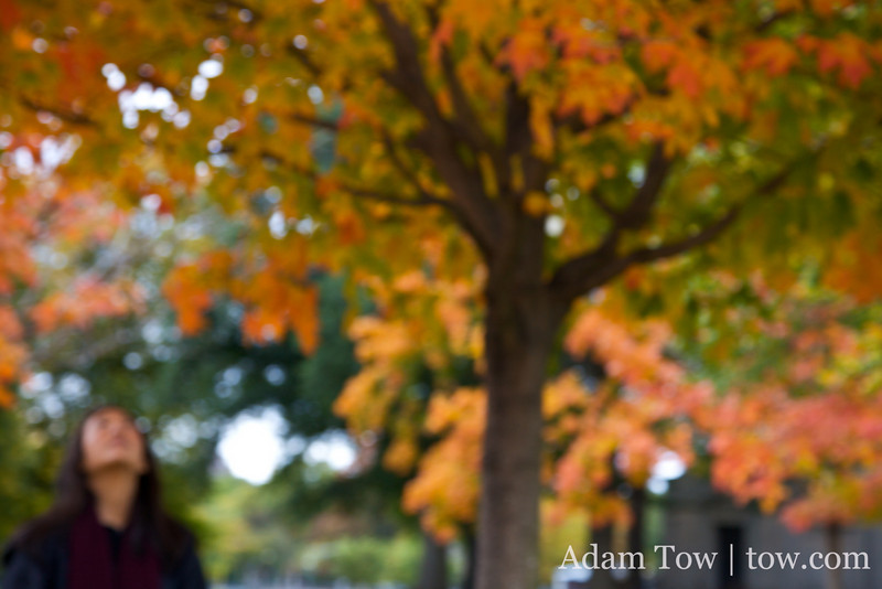 Blurry autumn leaves.