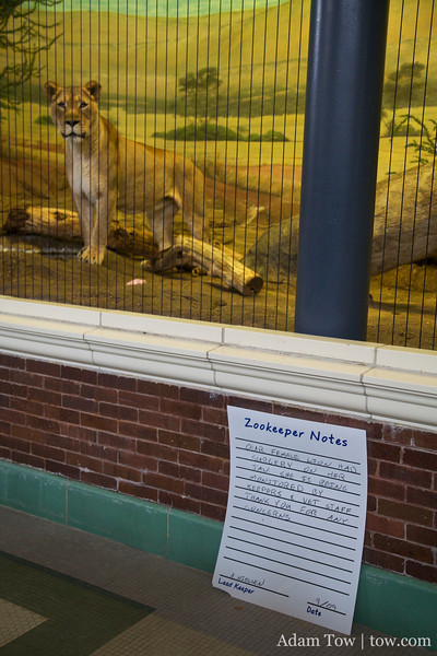 Zookeeper notes about this lion.