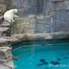 Polar bears have their own swimming environment.