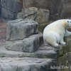 Sadly, we didn't see any of his polar bear friends. Who's to keep him company?