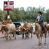 Watching the cattle drive in Fort Worth.