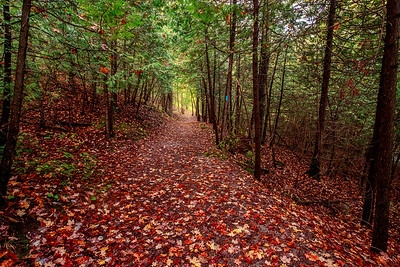 Woodland carpet of colours