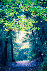 Sentimental thoughts in the forest path