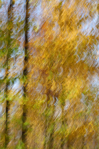 Autumn Leaves #10, October 2020