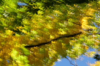 Autumn Leaves #84, October 2020