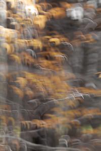 Autumn Leaves #69, November 2020