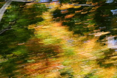 Autumn Leaves #30, October 2020
