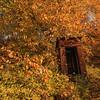 Autumn Outhouse