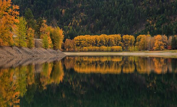 Dry Lake Aspens