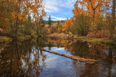 Penticton Creek Autumn Reflections