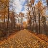 Mission Creek Greenway- Peak of Autumn