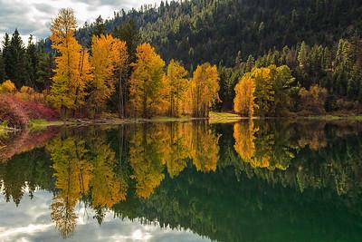 Allison Lake Aspens