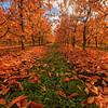 East Kelowna Autumn Explosion