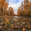 Mission Creek Cobbles- Peak of Autumn