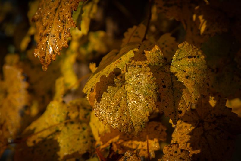 Hues of Autumn