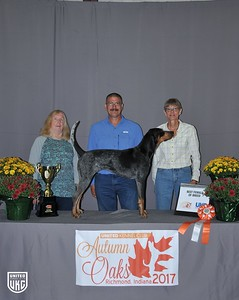 Friday Bluetick Best Female of Breed