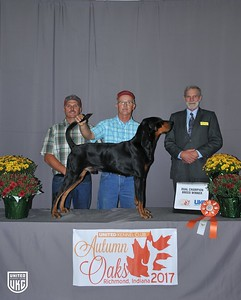 Friday Black & Tan Dual Champion