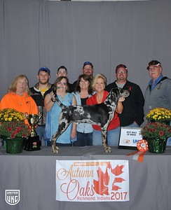 Friday American Leopard Hound Best Male of Breed