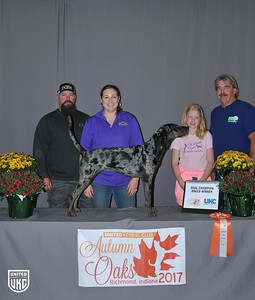 Friday American Leopard Hound Dual Champion