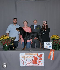 Friday Black & Tan Best Female of Breed