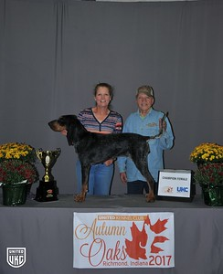 Saturday Bluetick Champion Female
