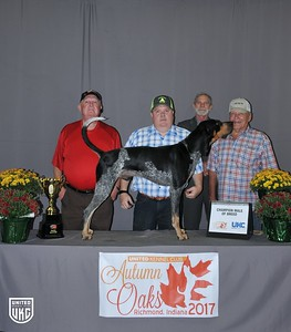Saturday Bluetick Champion Male