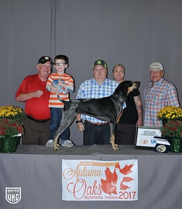 National Grand Show Champion Opposite Sex Bluetick