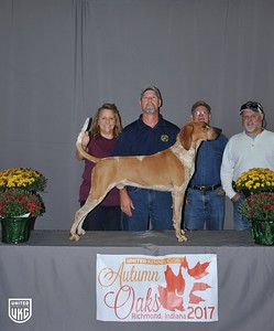 Saturday English Grand Champion Male