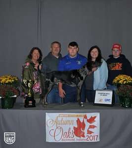 Saturday American Leopard Hound Champion Male
