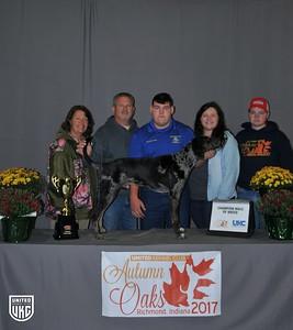 Saturday American Leopard Hound Champion Male