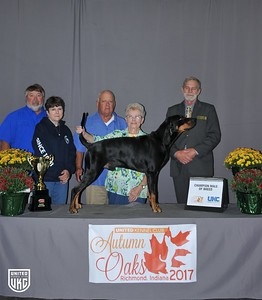 Saturday Black & Tan Champion Male