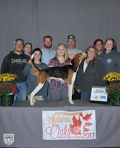 National Grand Show Champion Opposite Sex Treeing Walker