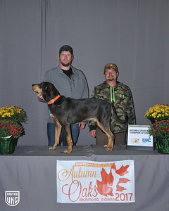 National Grand Nite Champion Leopard Hound